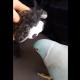 Потрясающий разговор попугая с новой игрушкой