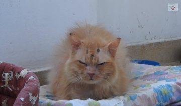 Кошку выбросили на улицу в 17 лет: она возненавидела людей