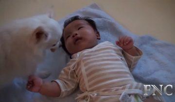 Трогательный ролик о собаках и детях собрал 6,7 млн просмотров