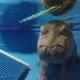 Гиппопотам играет в прятки в бассейне