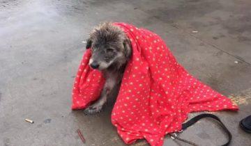 Собачка терпеливо ждала под дождем, когда вернутся ее хозяева