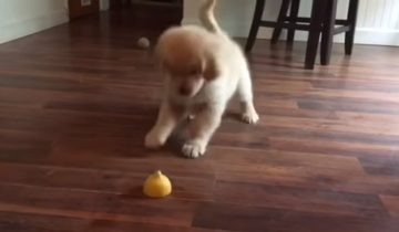 Забавная реакция щенка на кусок лимона