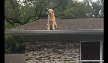 Познакомьтесь с Гекльберри — псом, который любит сидеть на крыше