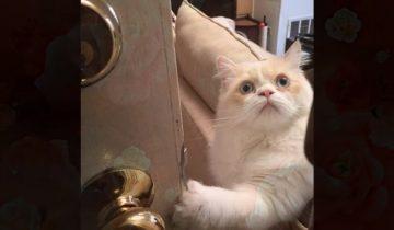 20 признаков того, что кот вас точно любит