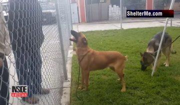 Собака была так рада видеть хозяев: наконец-то они пришли за ней в приют!