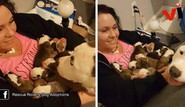 Когда эта женщина приютила собаку, она еще не знала, как животное ее отблагодарит