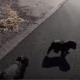 Парень нашел этих щенков на дороге, пролегающей через пустыню