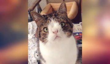 Кот с дефектом мордашки обрел любящего хозяина