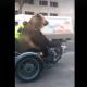 Ролик с медведем-байкером собрал 4,6 млн просмотров