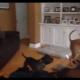 Собаки играют в игру «Пол — это лава»