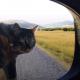 Этот кот — заядлый путешественник и любитель приключений