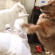 Живут как кошка с собакой: каково это?