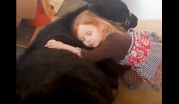 Девочка без спроса заманила теленка в дом