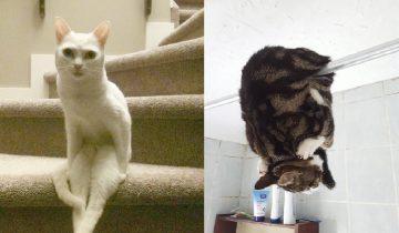 7 фотографий котов, которые ведут себя… странно