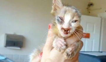 Этого котика считали слишком уродливым. Но 7-летняя девочка спасла его