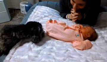 Милая встреча щенка и новорожденного младенца