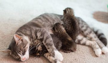 Мама-кошка, потерявшая деток, взяла на воспитание трех сироток