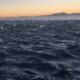 Фантастический ролик с дельфинами собрал больше 1 млн просмотров