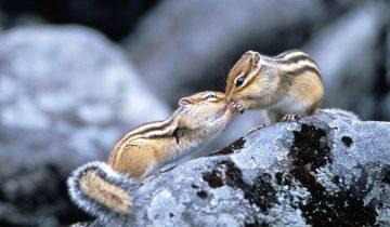 15 фотографий целующихся животных, которые задевают за живое