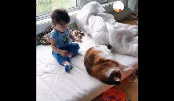 Малыш и кот: как найти применение пушистому питомцу