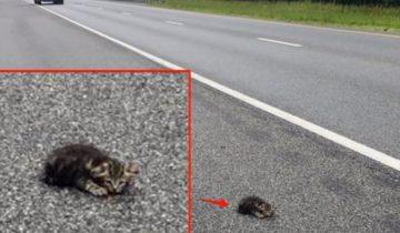 Женщина заметила котенка на обочине и не смогла проехать мимо