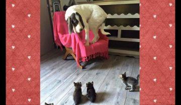 Встреча собак и котят: веселые кадры