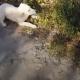 Бегун случайно обнаружил брошенного щенка
