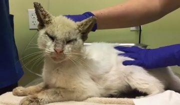 Этот кот едва не ослеп из-за чесотки