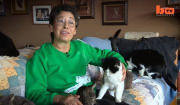 Она отдала свой огромный дом в полное распоряжение кошек (3 млн просмотров)
