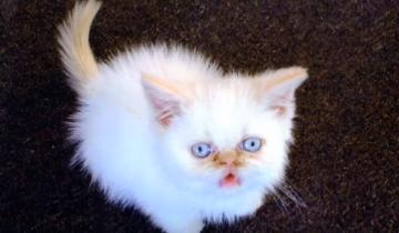 Кот по имени Матрос получил звание старпома капитана