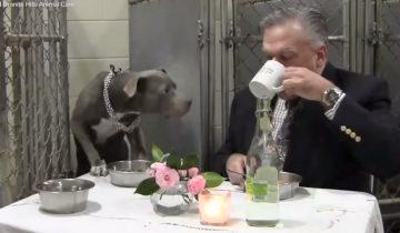 Ветеринар обедает с любимой собакой