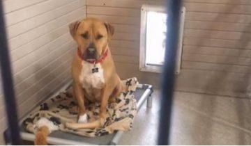 Больше двух с половиной лет этот пес живет в приюте