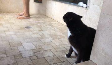 Кот принимает душ вместе с хозяином