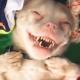 Песик-альбинос с редким недугом не перестает улыбаться