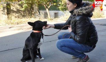 Собака преодолела на сломанных лапах 300 километров