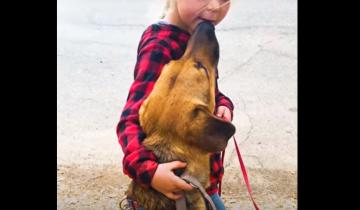 Собака месяцами избегала контактов с волонтерами