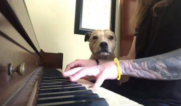 Хозяин играет для любимого пса на фортепиано