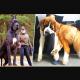 11 взрослых псов, которые в душе чувствуют себя щенками