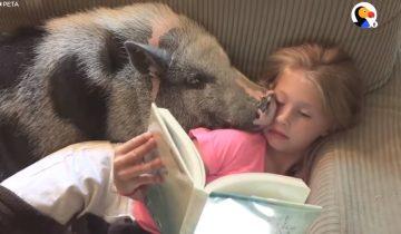 После жизни, полной боли и издевательств, свинка освоилась в новой семье