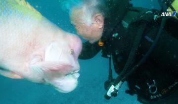 25 лет длится дружба дайвера с рыбой