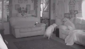 Собака сходит с ума, едва хозяин выходит за порог