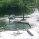 Потрясающий ролик о спасении слоненка собрал 15 млн просмотров