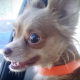 Собаки из приюта обретают хозяев: посмотрите на их реакцию
