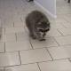В ветеринарную клинику Ростова взяли на работу енота
