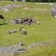 Ролик со слоненком, гоняющим птиц, собрал 6,2 млн просмотров