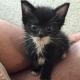 Чтобы спасти этого котенка, парень отдал всю свою зарплату (7 фото)