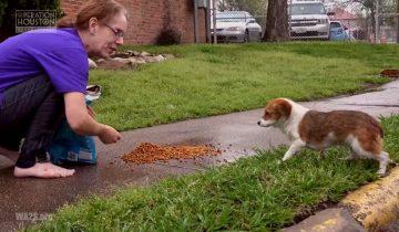 Бедного щенка спасли от наводнения и нашли для него новый дом