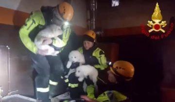 Спасатели вытащили из-под завалов после лавины трех щенков