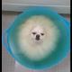 Вот она — идеальная ванна для собаки