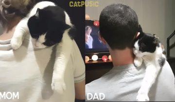 Отношения кота с хозяином и с хозяйкой
